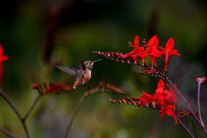 humming_flowers